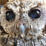 Zeus Owl of Space