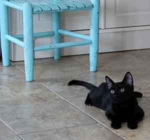 DiNozzo as a kitten.