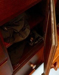 DiNozzo in his spot in the dresser