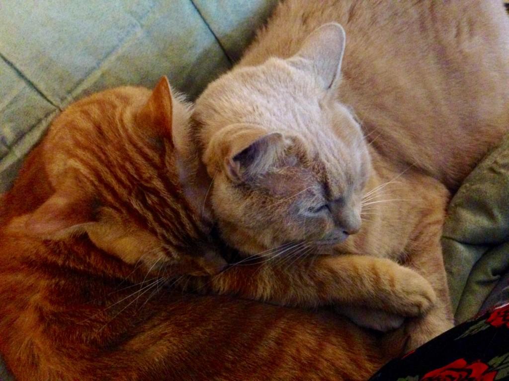 Flashback Friday: Cats & Netflix