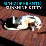 Schizophrantic Sunshine Kitty