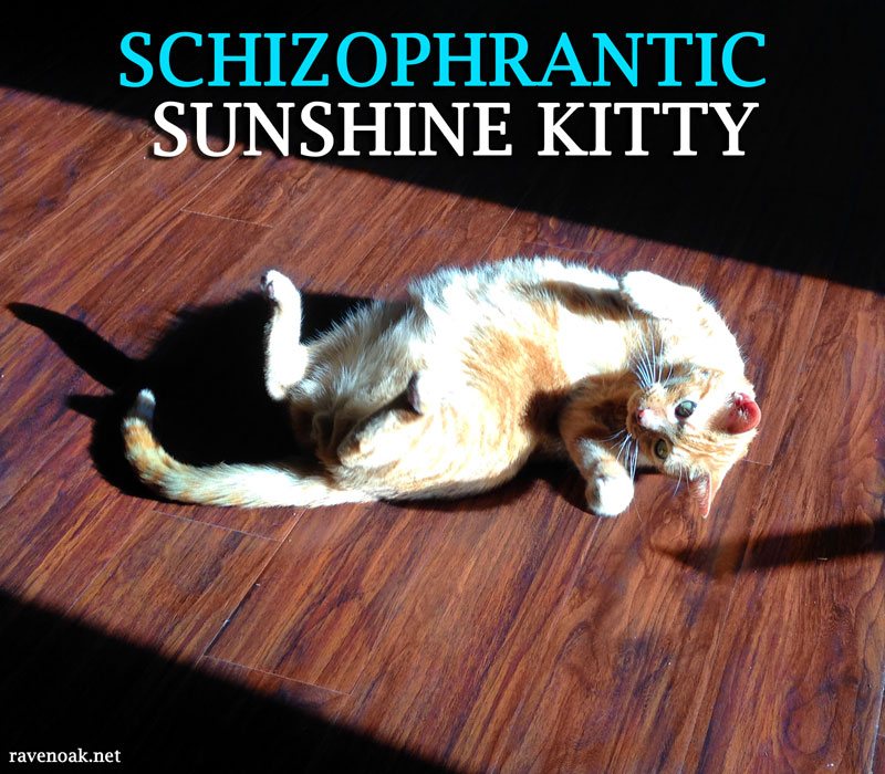 Schizophrantic Sunshine Kitty Riley